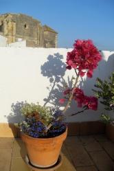 La Casa Grande plant on terrace