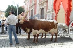 Romería del Rocío ox and wagon