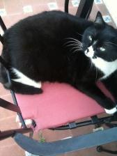 Spain's fattest cat