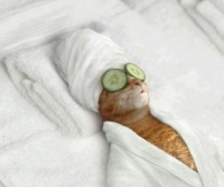 Tinkerbell enjoying some in-flight spa treatments