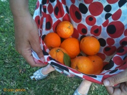 Collecting oranges