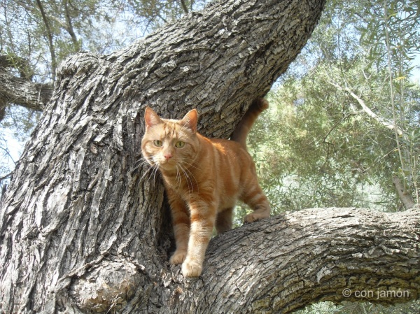 Cat up an olive tree