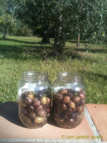 Olives in jars in front of trees