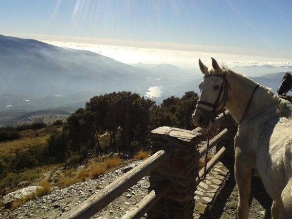 Horse in Las Alpujarras
