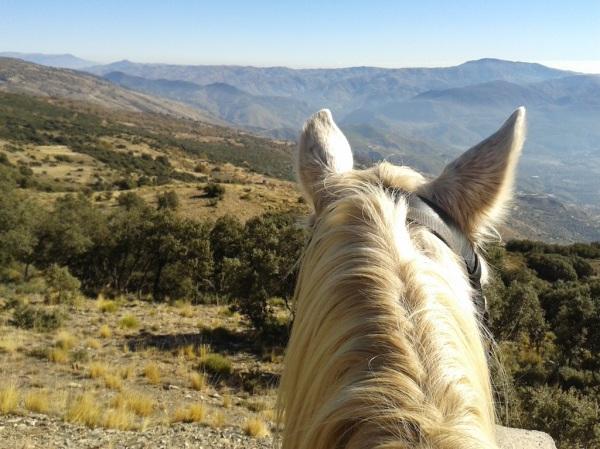 Horse head view