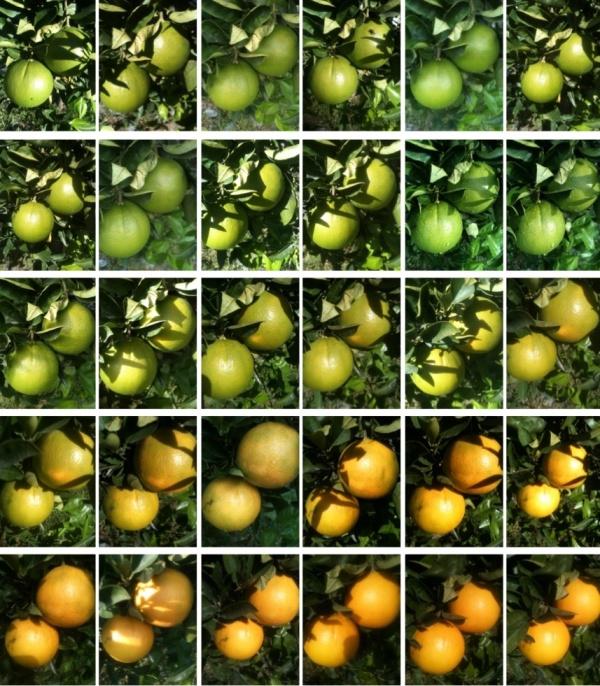 month of oranges