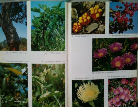 Pictures of plants from the book