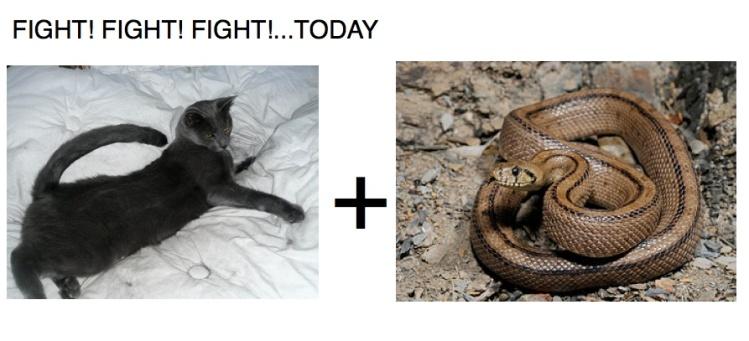 possum_snake