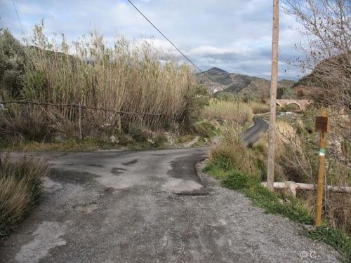 Ruta Olivos Centenarios