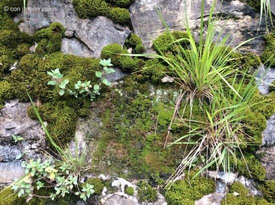 Moss in San Sebastian