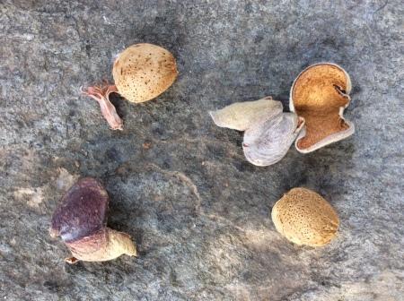 Almonds on stone
