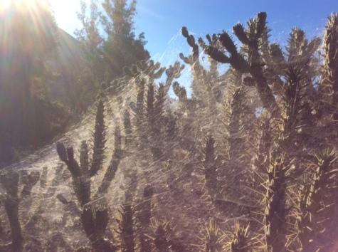 cacti_web-sun