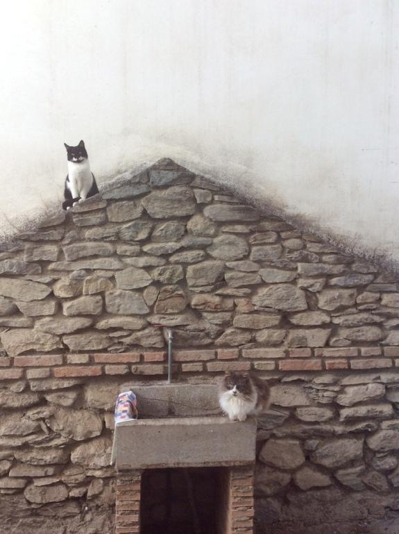 orgiva_cats