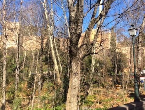 alhambra_trees