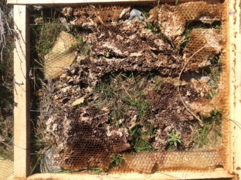 Abandoned bee hives(photo)