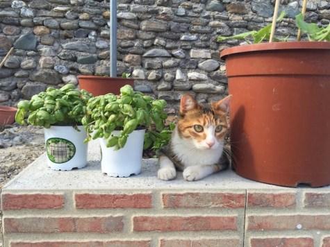 cat_huerta